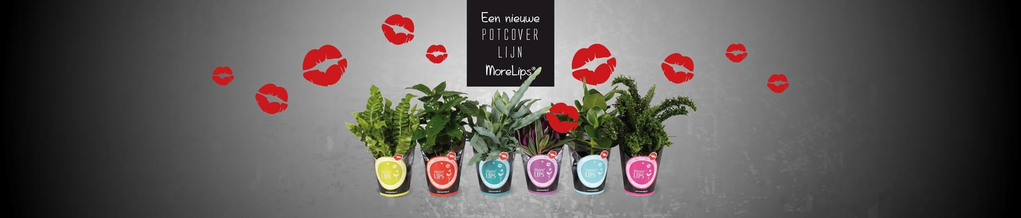 Verschillende Potcovers More Lips